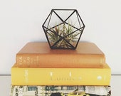 Small geometric glass terrarium // handmade with recycled glass // modern air plant holder - succulents - home decor