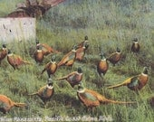 OREGON - CHINA PHEASANTS, Pacific Coast Game Birds, Vintage Postcard Used & Stamped, 1910s - AgnesOfBohemia