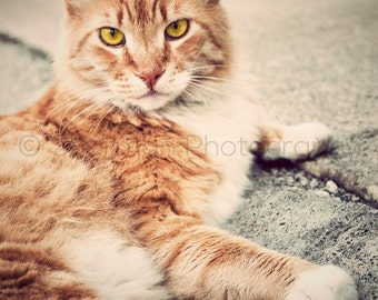 Cat Photography - Cute Cat Photo - Man Cat - Cat Home Decor - Kitten Photo - Cat Photo - Animal Photography - Cat Lover - Dramatic Cat
