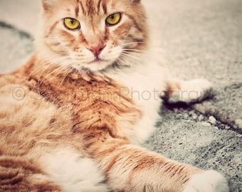 Kitten Photography Cat Print Vintage Orange -  8x10 8x8 10x10 11x14 12x12 20x20 16x20 - Photography