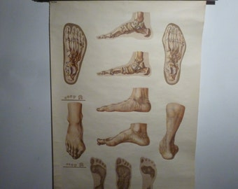 Vintage Anatomy School Chart - Human Foot Structure Pull Down Chart - Eastern German Mid Century Medical Chart