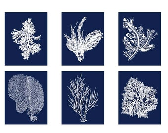 Blue Coral, Navy Blue White Coral Print Set of Six Prints, Blue Coral Art, Coral Wall Art, Six Coral Prints, Sealife print, Blue White Art