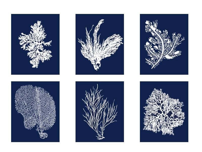Blue Coral Navy Blue White Coral Print Set of Six Prints
