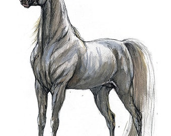 Grey arabian horse original pen and watercolor painting