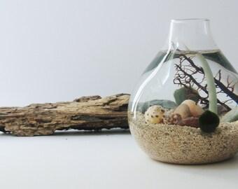 Sea Colors Aqua Terrarium - Marimo Ball, Japanese Moss Ball, Living Home Decor, Gift, Aquarium, Sea Fan, Sand, Sea Shells