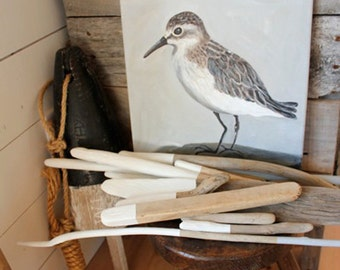Semi-palmated Sandpiper, giclee of an original acrylic painting, 12 x 12 inch archival inks, grey and white shore bird