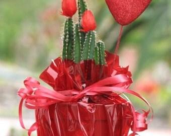 The Original Love Cactus Plant, Gift Plant