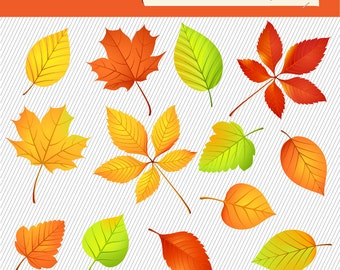 Autumn Leaves Clipart. Fall Tree Leaves Illustration. Natural Digital Images. 097