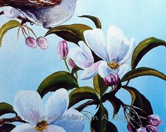 APPLE BLOSSOM TIME - Laser Print of White Throated Sparrow on apple blossoms, nature, bird, wings,