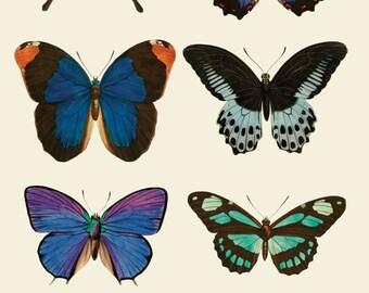 Butterflies poster/print