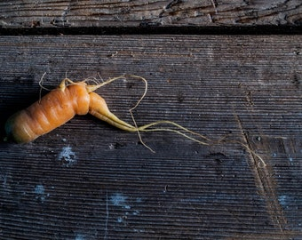 Food photography / Spooner Carrot // photography  gourmet  carrot  root