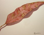 Eucalyptus leaf, simple leaf and shadow -- original watercolour painting