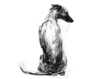 Whippet Sitting - fine art dog print