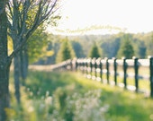 Fine Art Photography dreamy whimsical summer spring autumn field fence sunset nature photography green gold yellow large wall art home deco