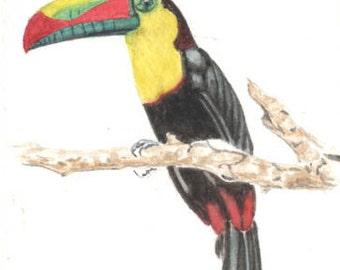Keel billed toucan, 5x7 original watercolor painting, art & collectibles, birds earthspalette