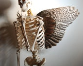 Fallen Angel, Winged, Skeleton Art