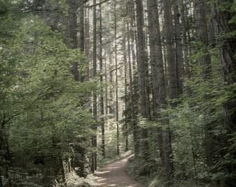 Green Forest Woodlands Photo | Oregon RainForest Path | Wanderlust Woods Photo Art | Forest Path Photo Art | Silver Falls State Park Oregon