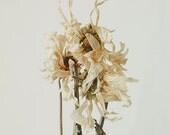 Floral Still Life 8x10 Fine Art Photography Print