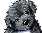 Newfoundland Dog ACEO Original Art Black and White Newfie