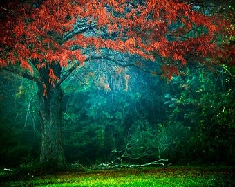 Fairytale Photo, Autumn Foliage, Fog, Mist, Fall Photography, Nature Decor, Enchanted Forest, Magical Landscape, Colorful Photography
