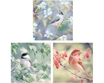 Bird Art Prints, Bird Photos, Nursery Art, Bird Prints, Animal Art, Nursery Wall Art, Photography Set, Bird Wall Art, Set of 3 Prints