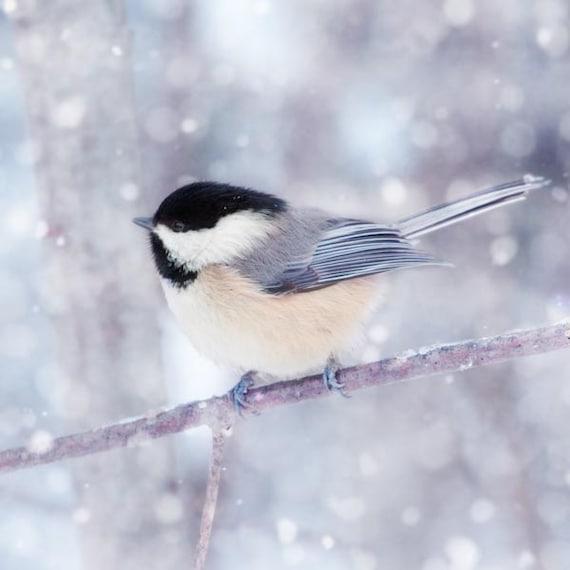 Winter Wall Art, Holiday Decor, Winter Animal Photography, Bird Wall Art, Nature Photography, Winter Photography, Chickadee in Snow No. 12