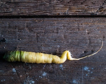 Food photography / The BEND YOUR KNEE carrot, photography  gourmet  carrot  root