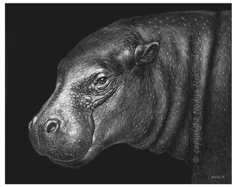Happy Hippo Art Print - 8x10 inches (20x25cm) - African Nature Decor, black and white, scratchboard print, Fine Art Giclee Reproduction