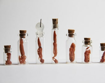 Tiny Polymer Clay Squid in a Bottle