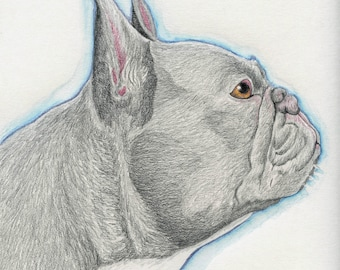 French Bulldog Original Pencil Drawing Pet Dog Art-Carla Smale