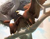 Bald Eagle, Peregrine Falcon - Bird Print - Vintage 1976 - 11 x 8.5