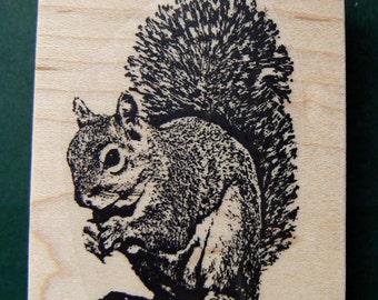 Squirrel Rubber stamp Q2