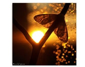 Moth at Sunset Photograph Affordable Autumn Trends Orange Nature Photography Decor Nature Lover Woodland Scene Moth