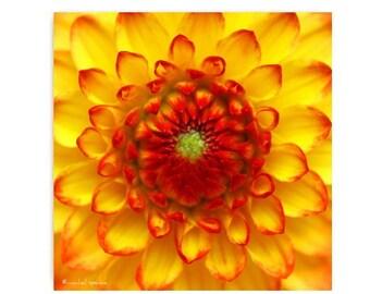 Orange Chrysanthemum Print  Affordable Home Photography Prints Nature Photography Nature Lover Woodland Scene Flower Botany Print