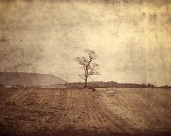 solitary tree landscape photography monochrome farmland fine art photography home decor