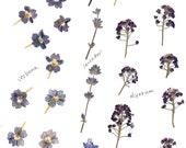 Original clip art sheet digital blue and purple small flowers