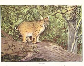 1926 Animal Print - Bobcat - Vintage Antique Natural History Home Decor Art Illustration for Framing