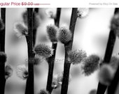 ON SALE spring branches - 5x7 photo - sand and petals photography