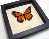 Valentine's Day Gift The Monarch Butterfly Shadowbox Display 111