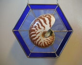 Sliced Natural Nautilus in Blue Stained Glass