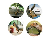 Squirrel  Magnets : 4 Sassy Squirrels for your home, your collection,  or to give as a unique gift