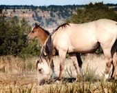 Mother and Child Horse Photography Print, Fine Art Photograph, Wildlife Decor, Nature Photo, Wild Horses, Mustang, Sandy Dune, Brown