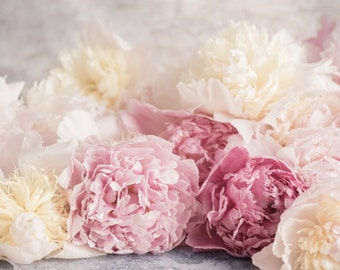 Flower Photography - French Peonies, Floral Fine Art Photograph, Still Life, Large Wall Art