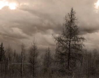 Stormy - 8X10 Fine Art Photograph
