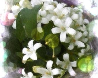 Jasmine Incense 25 sticks with crystals
