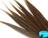 """Wholesale Tail Feathers , 10 Pieces - 16-18"""" Natural Golden Pheasant Tail Feathers : 3866"""