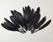 24pcs Small Duck Quills, Stiff loose feathers-Black