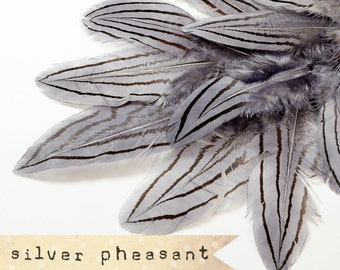 12 pcs - Silver Pheasant Feathers - Grey - select grade, zebra, stripes, exotic feathers