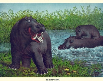 antique victorian hippopotamus illustration digital download