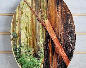 "Eucalyptus Grove - 5""x7"" Oval Distressed Photo Transfer on Wood"